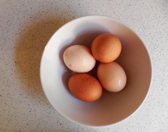 eggs #voraciousvander